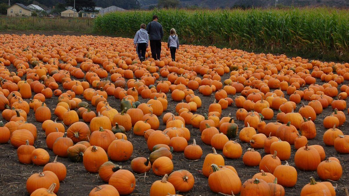 Nonprofit Pumpkin Patch