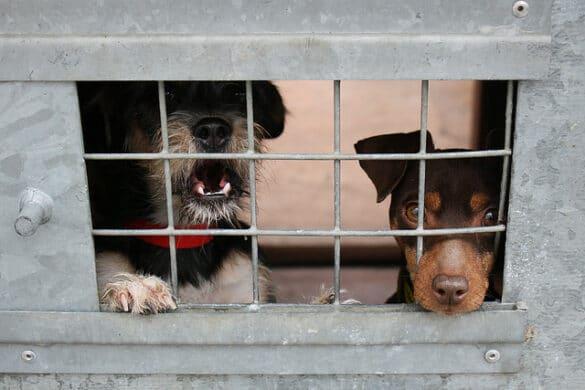 Robert Kurzban animal shelter